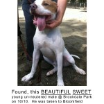 Dog Found At Brookdale Park