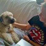 Dog Named Sadie Found Wandering Gates Avenue Neighborhood (UPDATED)