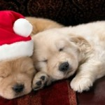 Pet Adoption to Take Place December 1 at Montclair Feed and Pet Supply
