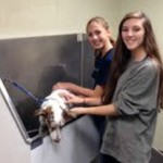 Montclair Dog Wash Benefit Makes a Splash