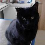 Bloomfield Woman Seeks Help for Her Sick Cat