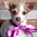 Valentine's Day Photo Fund Raiser for Fur Babies On Saturday