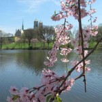 Essex County: Our Cherry Blossoms Are Way Better Than Yours