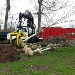 Anderson Park Gets 22 New Trees