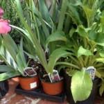 Van Vleck Plant and Garden Sale Coming Soon