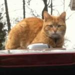 Missing Cat: 'Archer' (FOUND)