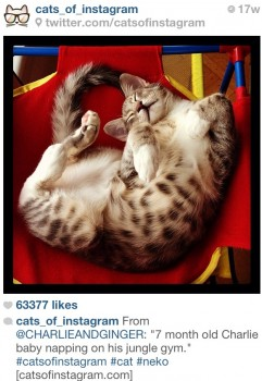 Cats_of_Instagram