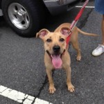 Meet Macy – Available For Adoption At Montclair Animal Shelter