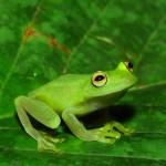 Explore Wildlife Of The Tropics On Wednesday In Montclair