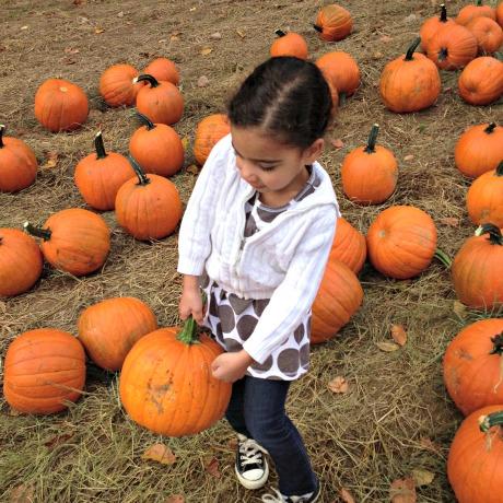 pumpkin picking in new jersey