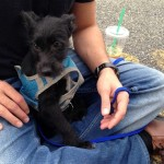 Lost Dog, Sunday 10/27, Bellevue Ave Montclair