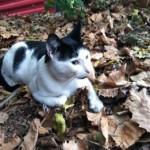 Stray Cat in Belleville Needs Help