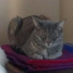 Cat Missing – Near Orange Road, Montclair