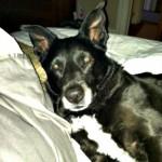 Lost Dog in Montclair (Found)
