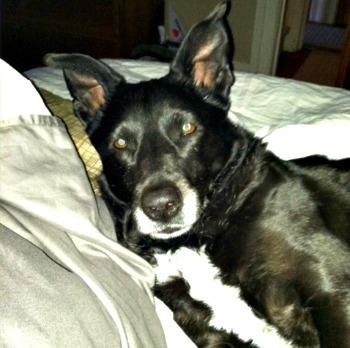Lost Dog in Montclair