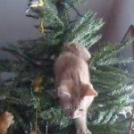 Kitty Says It's Time To Take Down The Christmas Tree