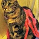 UPDATE (Found): Missing Cat in Montclair