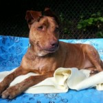 Montclair Shelter Dog Needs Caring Foster Home