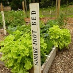 Learn How to Vegetable Garden at Presby Iris Gardens