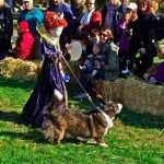 A Great Day For Dogs At Strut Your Mutt