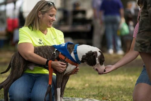 Animal Shelter Volunteers & Staff Step Up Adoption Efforts