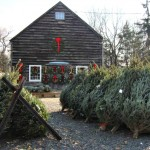 2016 Baristanet Guide to Buying (or Cutting Down) a Real Christmas Tree