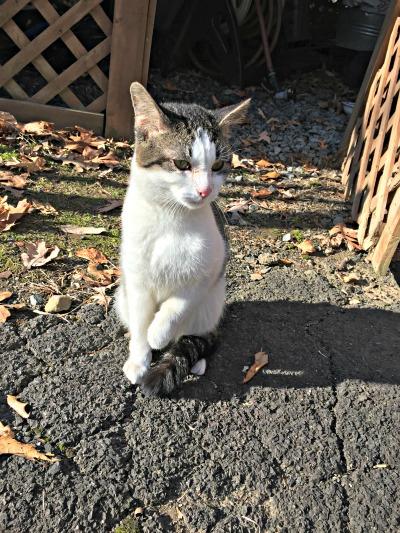 Found Cat in Montclair