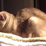 Lost Cat in Upper Montclair – Last Seen Greenview Way/Bellevue