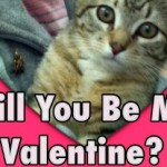 Enjoy Sweet Little Kisses at the Montclair Animal Shelter Kitty Kissing Booth Saturday