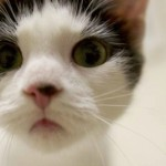Playful Cat at Cameron Animal Hospital in Need of a Family