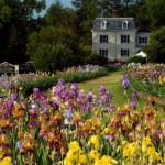 Mother's Day Giveaway: An Afternoon at Presby Memorial Iris Gardens