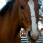R.I.P. Rocky the Horse