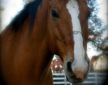 rocky the horse