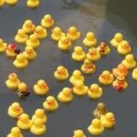 Glen Ridge High School Project Graduation to Hold Annual Duck Race