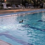 Seen Around Town: Cooling Off at Essex Pool