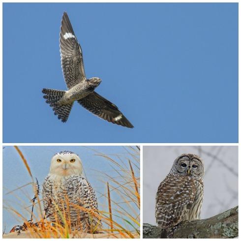 Montclair Bird Club