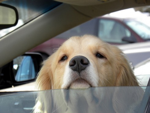 The Danger of Leaving Your Pets in a Parked Car