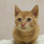 Sweet & Shy Kitten at Cameron Animal Hospital in Need of a Family