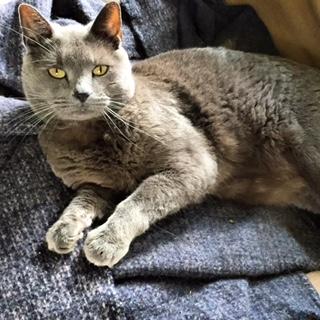 Missing Cat in Montclair