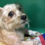 Donations Needed for Dog in Need of Surgery at Montclair Township Animal Shelter