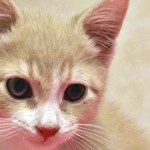 Adorable Kitten at Cameron Animal Hospital in Need of a Family