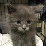 Cameron Animal Hospital to Host Kitten Adoption Event in Montclair