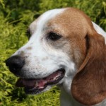 North Jersey Humane Society Adoption Event Friday at Lynnes Subaru in Bloomfield