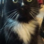 Have You Seen Mo? Last Seen on Hawthorne Place, Montclair FOUND