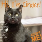<em>Pet Adoption: Montclair</em> Project Using Local Businesses to Help Find Animals Homes