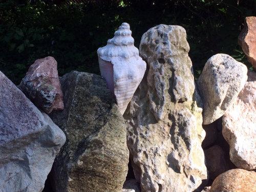 stone shell