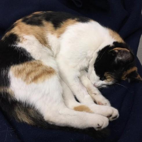 Cat Found in Montclair
