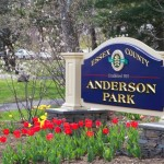 Help Plant Tulips in Anderson Park