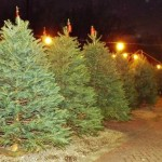 Baristanet Guide to Buying (or Cutting Down) a Real Christmas Tree