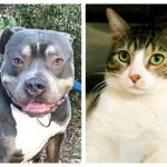 Bloomfield Animal Shelter to Hold Spring Fling Adoption Event